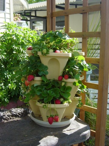Creative ways to grow strawberry at your garden 32