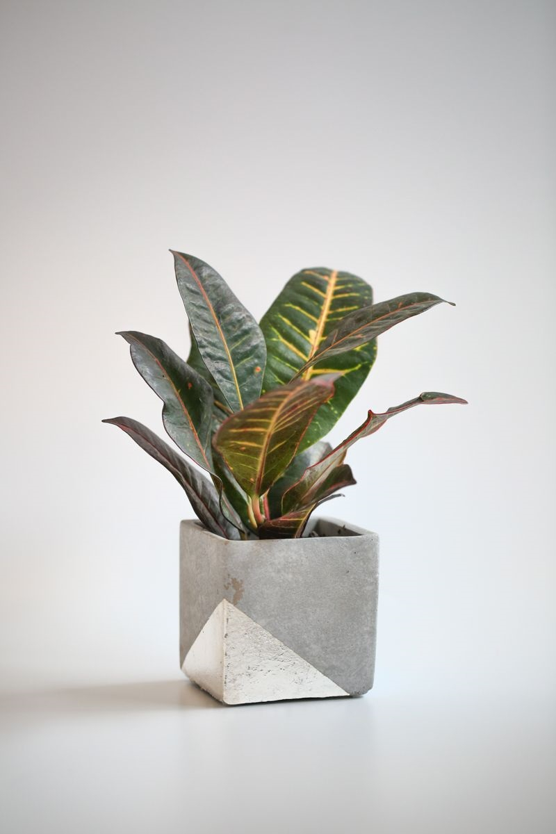Concrete planter with silver leaf