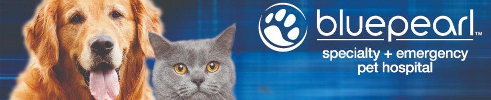 Image of: Sandy Springs Bluepearl Veterinary Partners Gentle Hearts Animal Hospital Bluepearl Veterinary Partners Mission Benefits And Work Culture