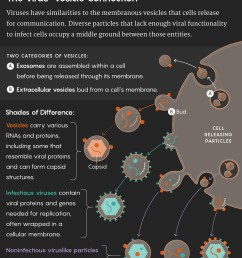 graphic illustrating the virus vesicle connection viruses have similarities to the membranous vesicles that [ 1120 x 1351 Pixel ]