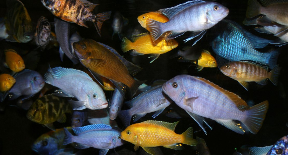 Hundreds of fish species, including many that humans eat, are consuming plastic