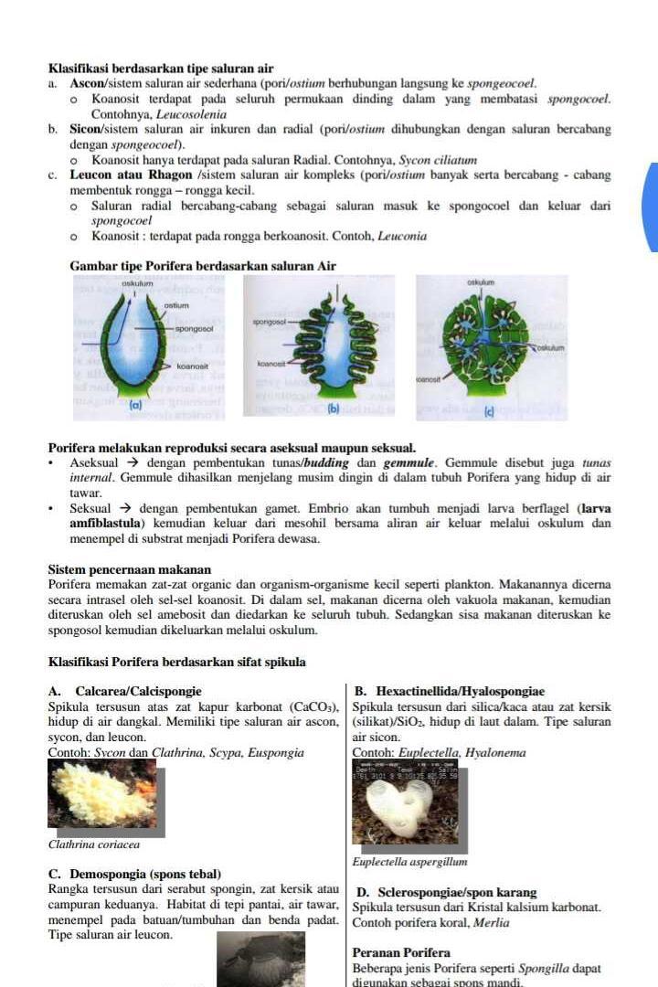 Saluran Air Pada Porifera : saluran, porifera, Steller:, Create, Beautiful, Social, Media, Stories