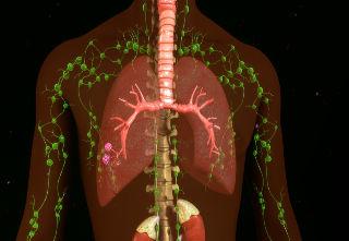 Inline_Lymphatic Health.jpeg