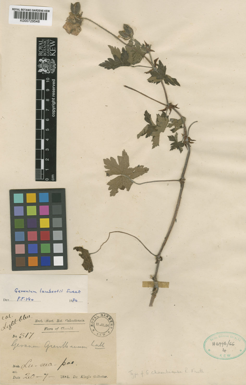 Himalaya Halle Geranium Lamberti Sweet | Plants Of The World Online | Kew Science