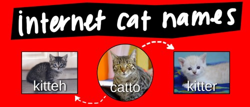 small resolution of cat pet diagram