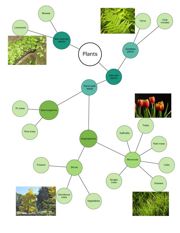 Plant Classification Diagram