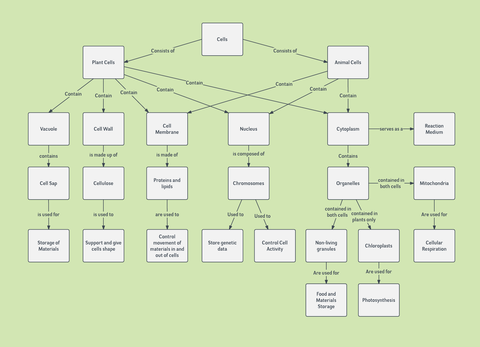 Cell Concept Map Template