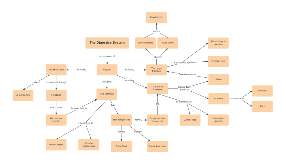medium resolution of digestive system concept map