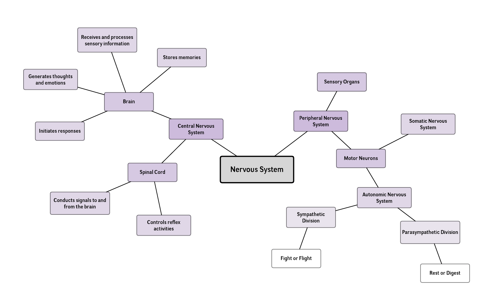 hight resolution of nervous system mind map