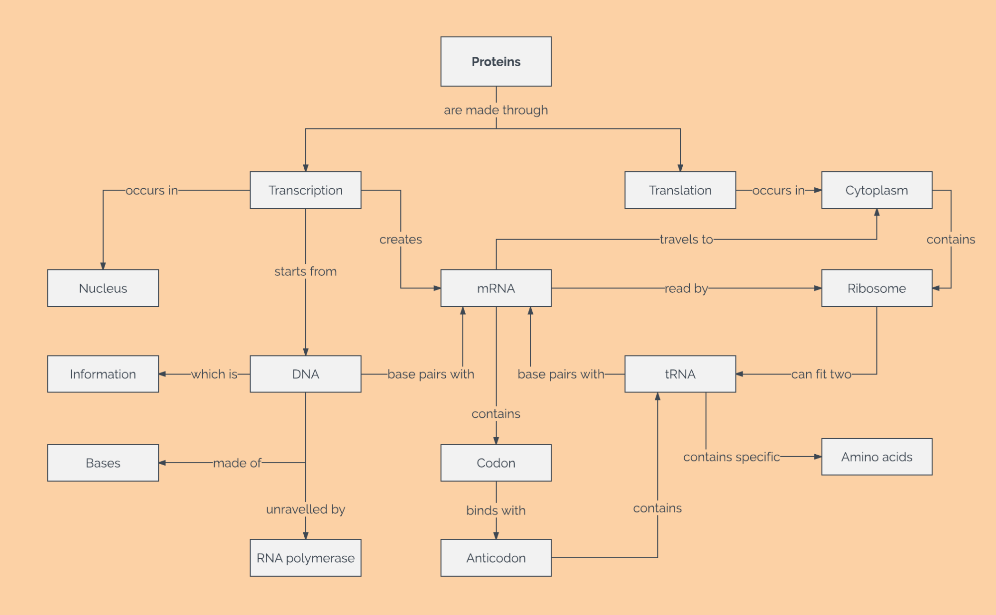 hight resolution of protein concept map template