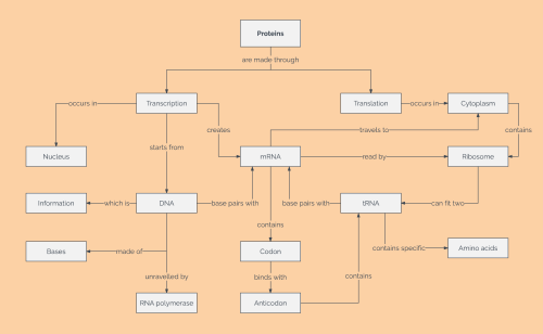 small resolution of protein concept map template