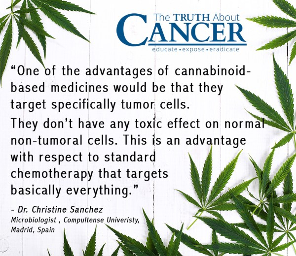 Cannabis and Cancer How Marijuana Helps the Body Heal