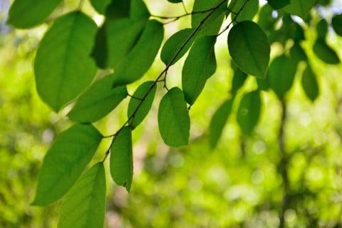 広葉樹とは?代表的な種類や特徴は?針葉樹との違いは? - HORTI ...