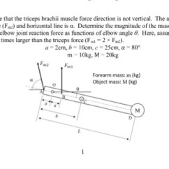 Triceps Brachii Diagram 2003 Dodge Ram Wiring Trailer Solved Now Assume That The Muscle Force D