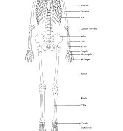 cervical vertebra scapula sternum humerus rib lum [ 1554 x 2046 Pixel ]