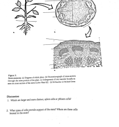 plant anatom b c figure 5 stem anatomy a diagram of [ 768 x 1024 Pixel ]