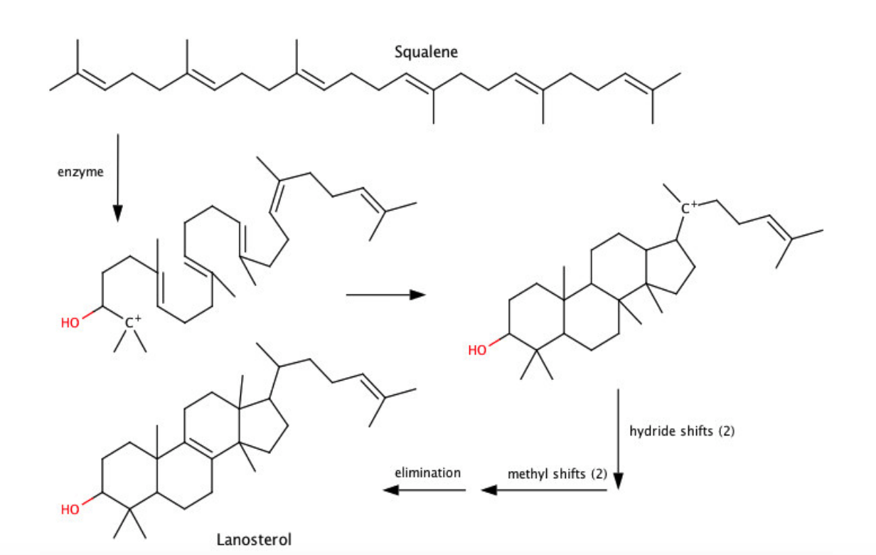 Solved: Cholesterol Is Synthesized From Lanosterol.Squalen