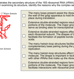 question the diagram below illustrates the secondary structure of the 16s ribosomal rna rrna of the smal  [ 1246 x 772 Pixel ]