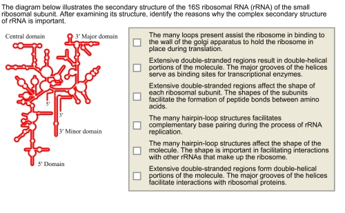 small resolution of question the diagram below illustrates the secondary structure of the 16s ribosomal rna rrna of the smal