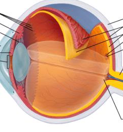 ora serrata sclera choroid retina macula lutea fovea centralis ciliary body ciliary zonule suspensory ligament [ 2046 x 1215 Pixel ]