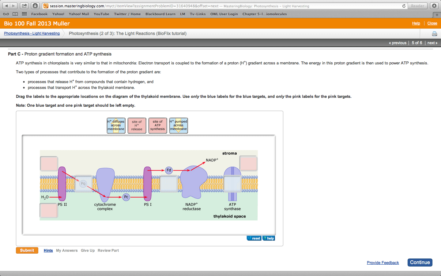 hight resolution of atp synthesis in chloroplasts is very similar to t