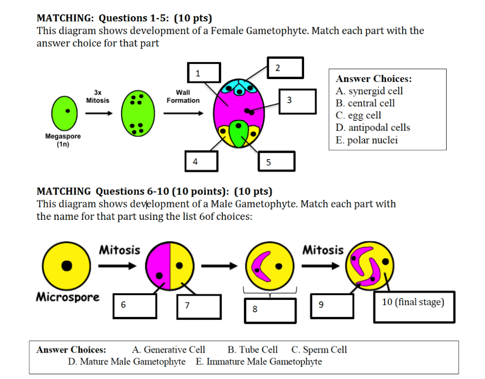 medium resolution of matching questions 1 5 10 pts this diagram shows development of