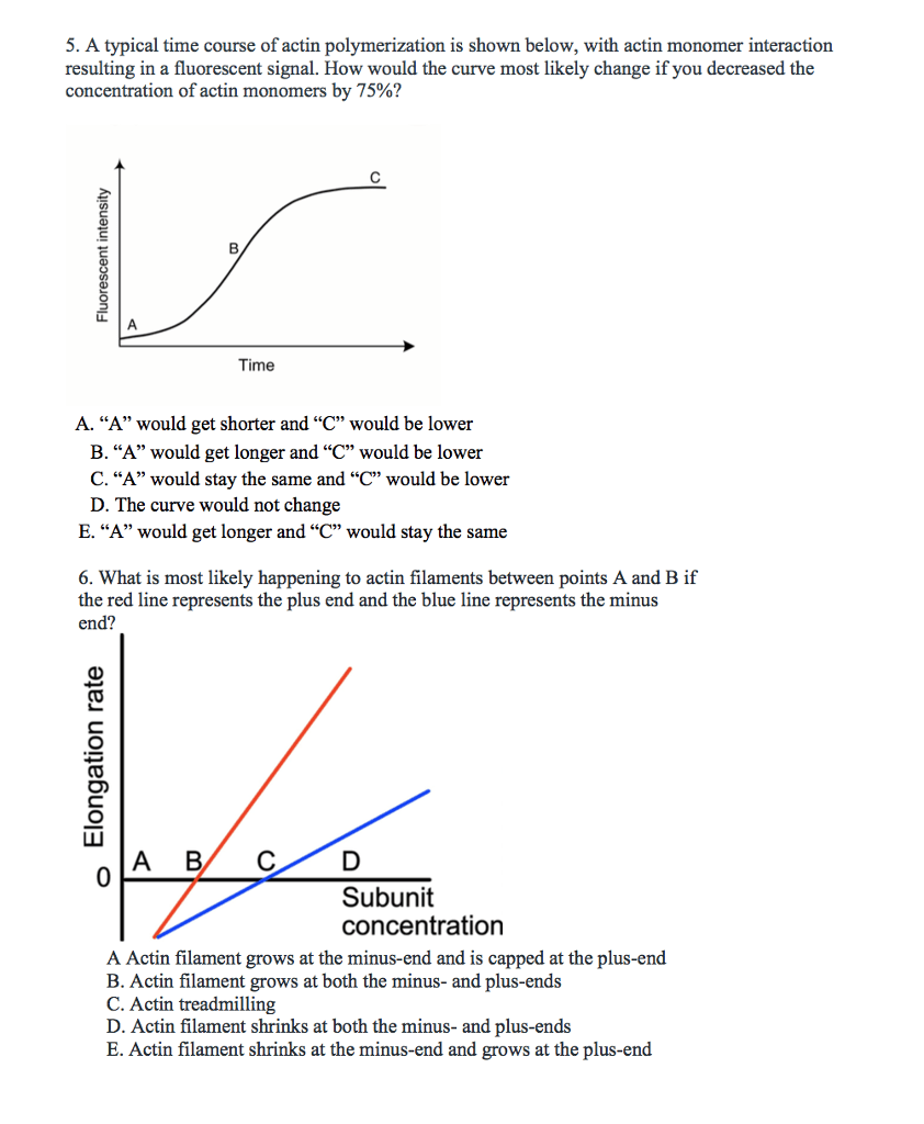 hight resolution of a typical time course of actin polymerization is shown below with actin monomer