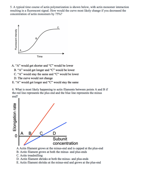 small resolution of a typical time course of actin polymerization is shown below with actin monomer