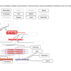 Skeletal Muscle Diagram Labeled Names Of Bones In Human Skeleton Structure To Label Wiring Diagrams Control Solved The Figure Below Demonstrate Your Knowled