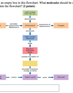 Note that there is an empty box in this flowchart what molecules should also solved flowcha rh chegg