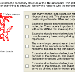the diagram below illustrates the secondary structure of the 16s ribosomal rna rrna of [ 1316 x 744 Pixel ]