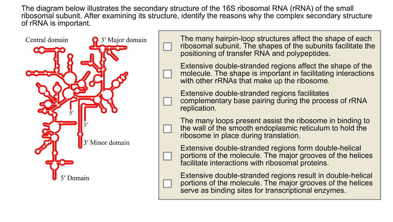 hight resolution of the diagram below illustrates the secondary structure of the 16s ribosomal rna rrna of