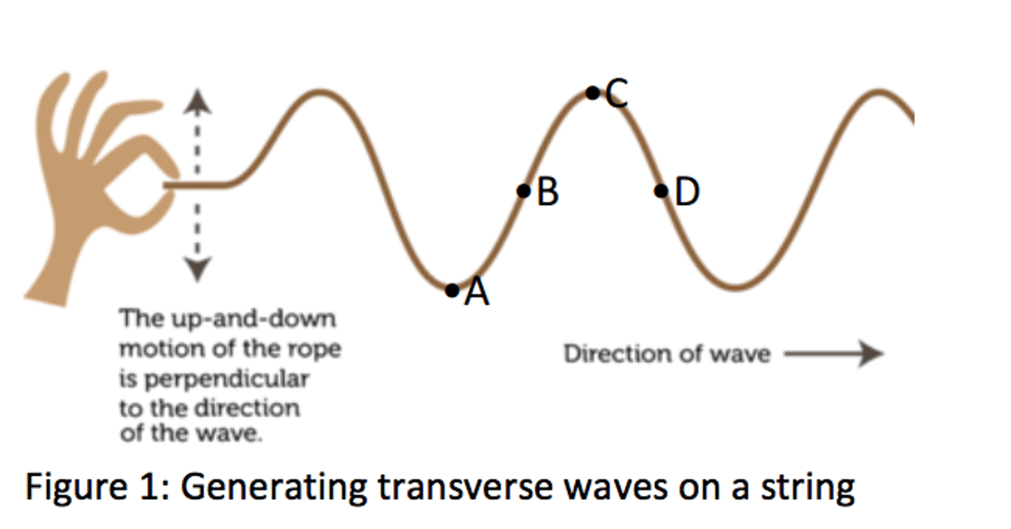 Solved Regarding The Transverse Wave In Figure 1 What Ar