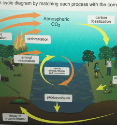 complete the carbon cycle diagram by matching each [ 2046 x 1354 Pixel ]