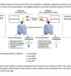 the diagram below shows how the enzyme pfk can be activated or inhibited to [ 1024 x 809 Pixel ]
