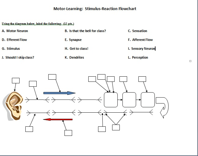 synapse diagram label 2002 ford taurus cooling system using the below following a m chegg com motor learning stimulus reaction flowchart k ing thediagram thefollowing