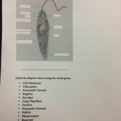 Euglena Cell Diagram With Labels 1991 Honda Crx Wiring Solved Label The Above Using Words Given C Membrane Chloroplast Contractile Vacuole