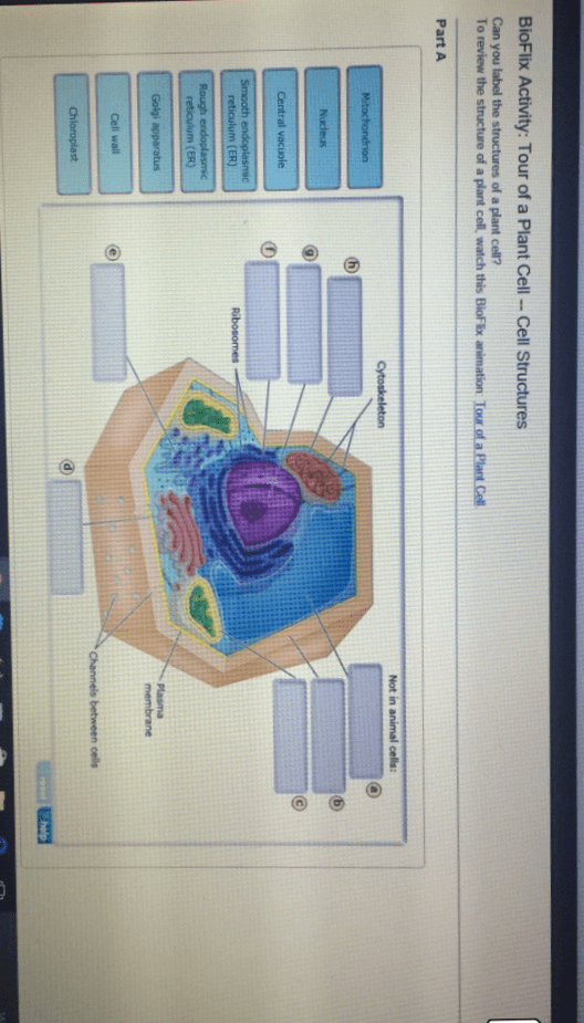 plant cell diagram with functions space solved: can you label the structures of an animal cd? to r... | chegg.com