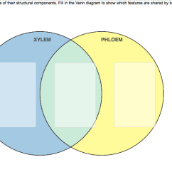 Questions On Venn Diagrams With Solutions Ge Dryer Wiring Diagram Solved: Xylem And Phloem Differ In Function Some Of... | Chegg.com