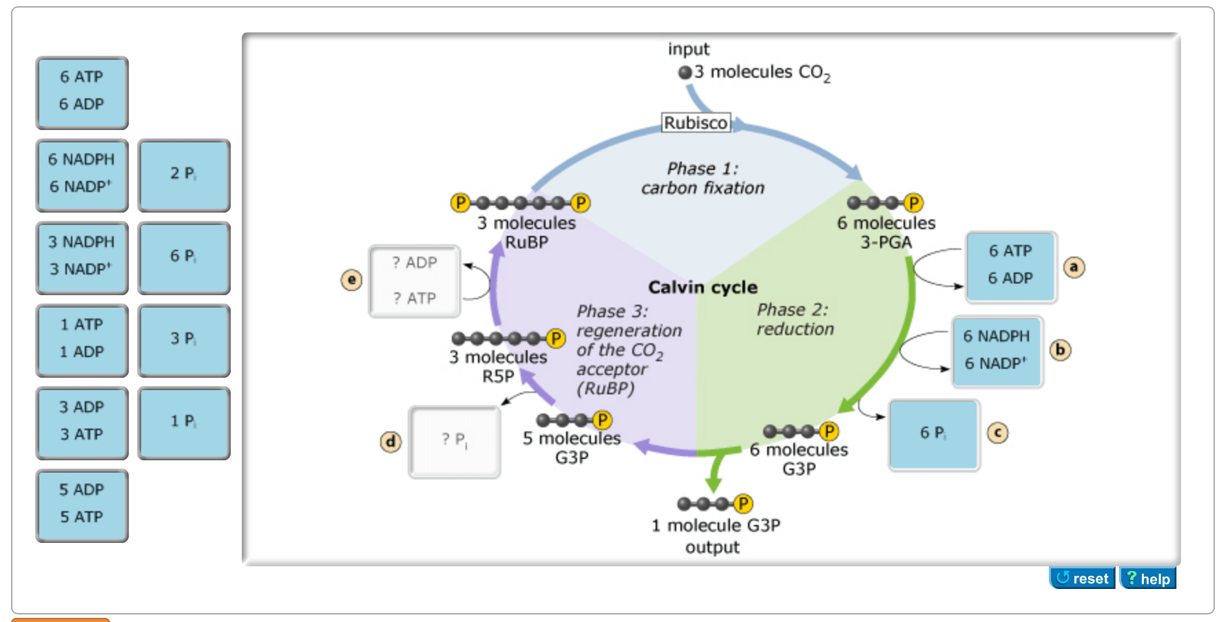 Solved The Calvin Cycle Depends On Inputs Of Chemical Ene