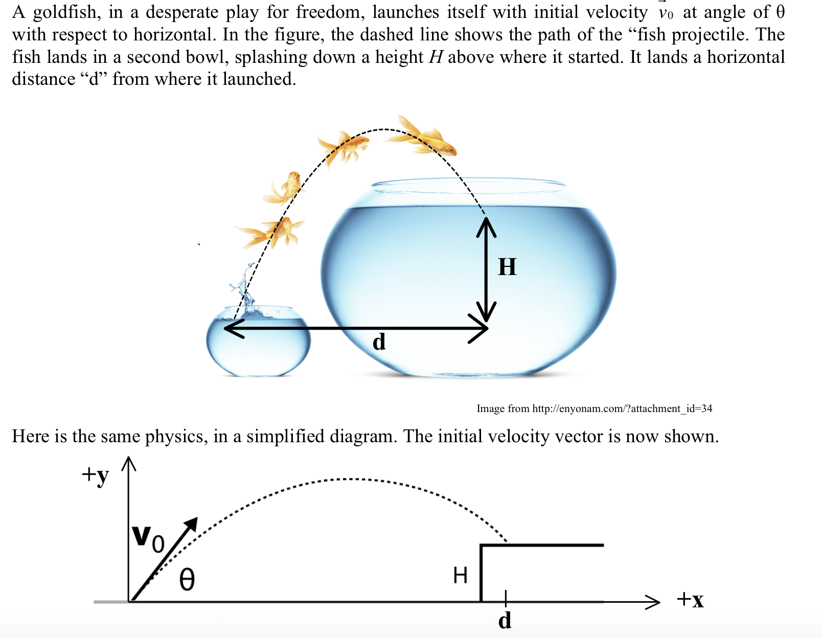 hight resolution of a goldfish in a desperate play for freedom launches itself with initial velocity v0