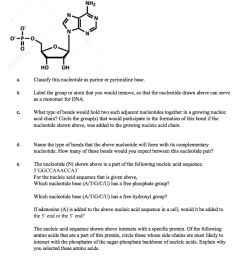 question the following diagram represents a nucleotide that serves as a monomer for ribonucleic acid rna classify this nucleotide as purine or  [ 872 x 1024 Pixel ]