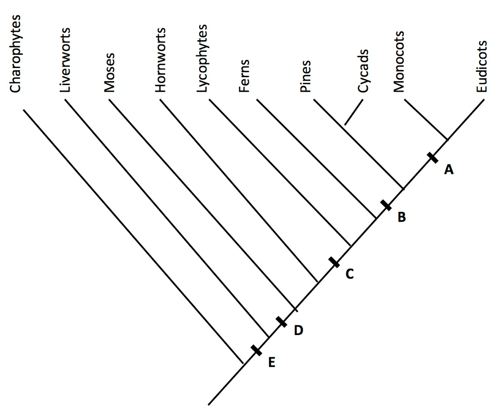 Solved: A) On The Diagram Below, Use The Letters A-E To In