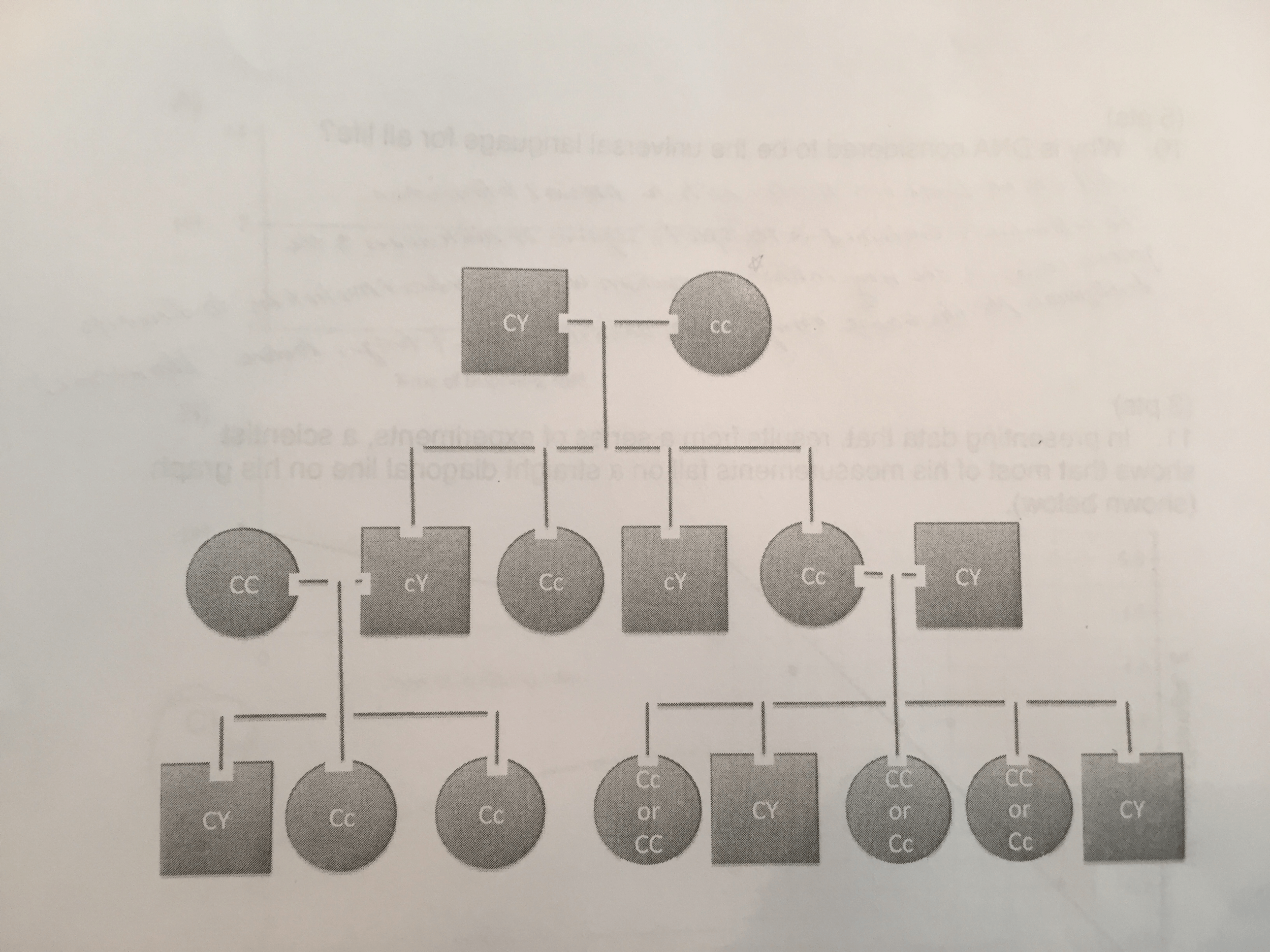 Solved Pedigree Colorblindness Red Green Colorblindness I