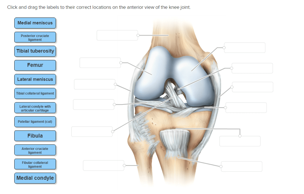 Right Knee Anatomy Diagram
