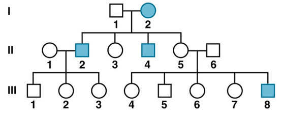 Solved: The Pedigree Below Shows The Inheritance Pattern O