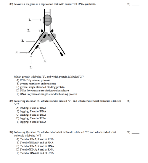 small resolution of below is a diagram of a replication fork with conc