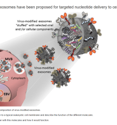 virus modified exosomes have been proposed for tar [ 2046 x 1328 Pixel ]