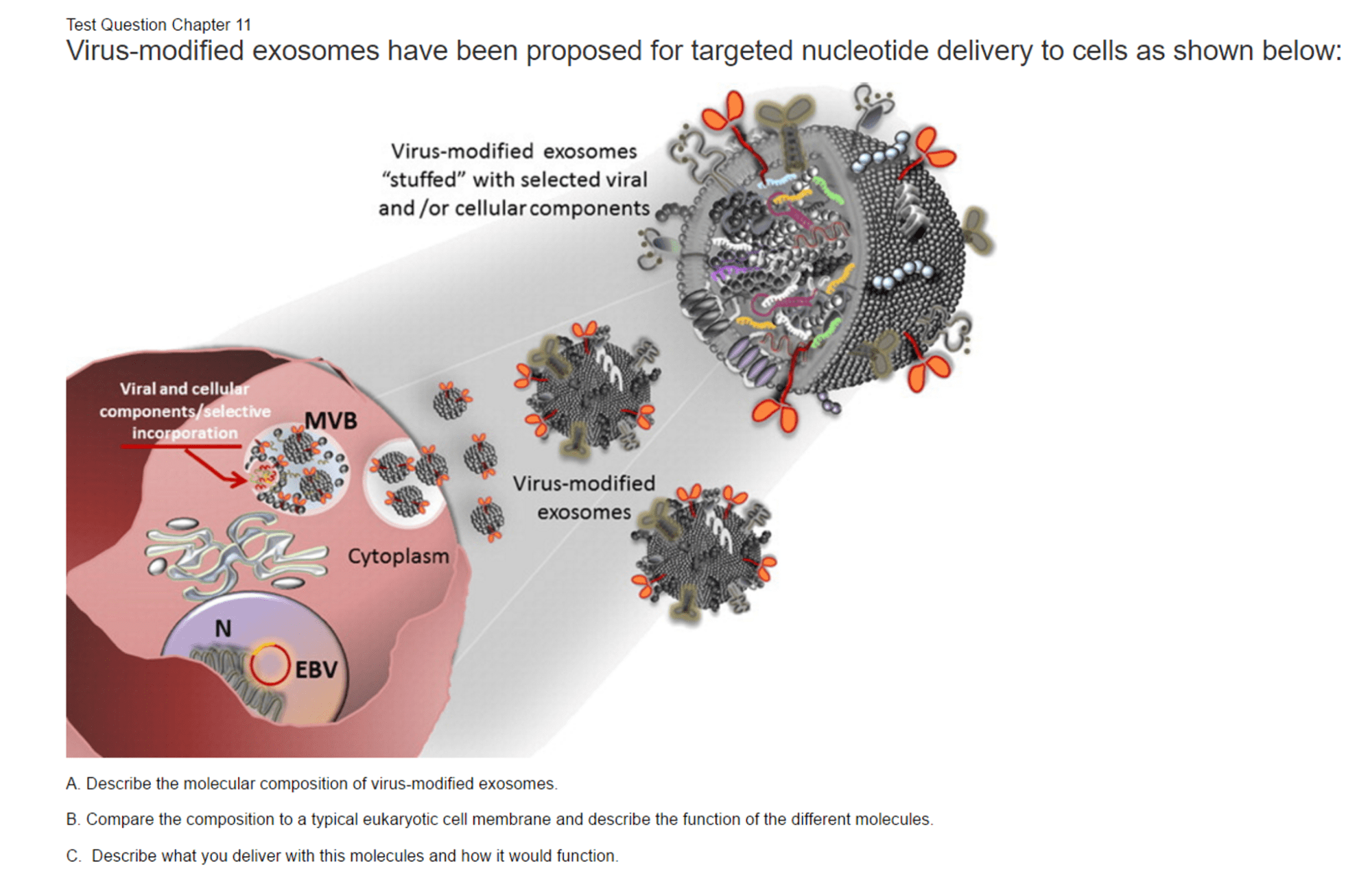 hight resolution of virus modified exosomes have been proposed for tar