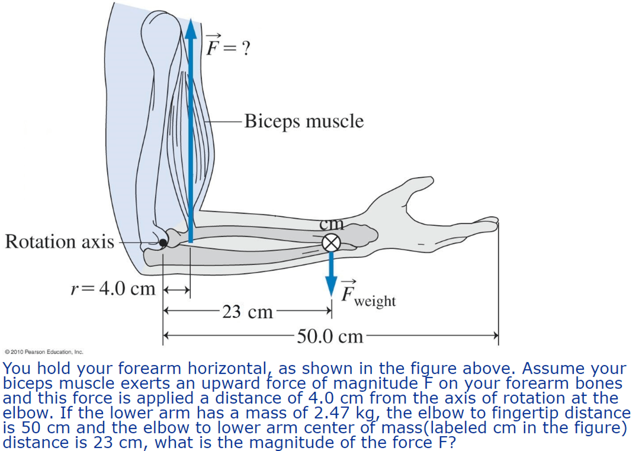 forearm bones diagram single phase motor with 2 capacitor wiring solved you hold your horizontal as shown in the biceps muscle rotation axis r 4 0 cm weight 23 50 2010 pearson education